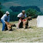 Tafi mit Bisura az Tarnak an der Coursing EM in Monte Bondone