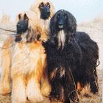 Cara mit ihren Nachwuchs Thalaia-Tafi und Topas