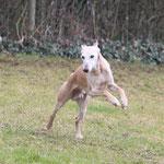 auch mit 13.5 Jahre rennt Winsten immer noch sehr gerne