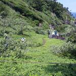 国の天然記念物、笠松海浜植物群叢。ハイネズがまるで良く手入れされた芝生のように繁っています。