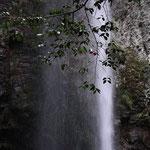 【2010年最優秀賞】滝の中の椿