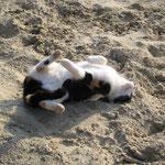 Herrlich warmer Sand ! Zoey, April`16