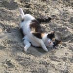 Zoey beim Sandbad !
