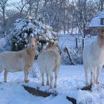 Schneeziegen ! Flecki,Winni,Nicki