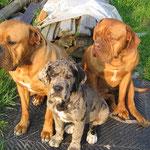 Die drei von der Tankstelle ! Buddy,Pepper, Gina