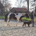 Pferdetraining im März`20
