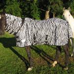 Da hat man mich doch als Zebra verkleidet ! (wegen der Stechfliegen)