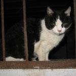 Lissy, 16,5 Jahre alt, Aug.`14