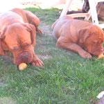 Die Birnen-Junkies ! Gina + Yuma