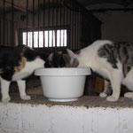 Hmm, lecker Ziegenmilch ! Zoey + Digger