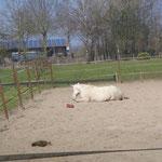 Sonnenbad mit Huhn ! Majid