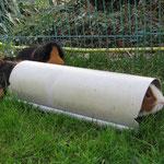 """Ich bin ein """"Langschwein""""! vo.Gismo, hi.Rosi"""