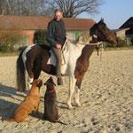 Pferdetraining mit Cooper