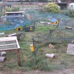 Mein Meerschweinchendorf 2010!