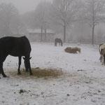 Amon nimmt ein Schneebad !