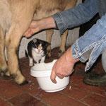 Hm, lecker Milch von Mabel !
