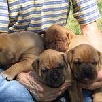 Vier müde Krieger !