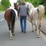 Drei schöne Rücken können auch entzücken ! Weideauftrieb 2010
