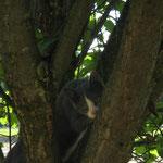 Katzen - Suchbild ! Blue im Pflaumenbaum