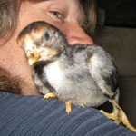 Nicht nur Hexen haben einen Vogel auf der Schulter,*g*! Kleiner Shamo-Kämpfer
