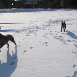 Yuma`s 1.Schnee, da muß, trotz Lahmheit, mal kurz getobt werden !