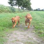 Yuma und Gina auf der Zielgeraden !