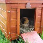 Josie weiht das neue Häuschen ein !