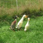 Eine Ente mit zwei Schnäbeln ?!?