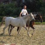 Handpferde-Training neben Natschi, Sommer`14