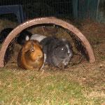 Penny + Zwergie