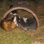 Smalltalk ! Penny, Hermine, Zwergie
