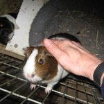 ...... so eine zahme, liebe Maus !
