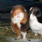Sind wir nicht süße Schnuten ? Bailey + Lucy