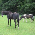 Puschi und sein Pony Shorty