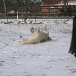 Ein Schneebad im März `13