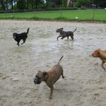 """Boxer Kira + Mix Kalle zu Besuch an unserem """"Hundestrand"""" *g* ! 11.05.14"""