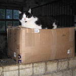 Der Paketdienst war da ! Lissy (verstorben Sept.`14)
