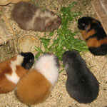 o. Bonny, Rosi, u. Yanni, Chichi, Rivero