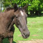 29 Jahre alt - etwas grauer und müder geworden ! Ende April `14