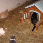 Kaninchen mit langem Schwanz ....... ! Zoey
