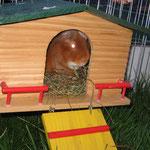 Auch Feivel + Barney haben jeder ein neues Haus