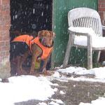 Bei dem Wetter schickt man doch keinen Hund vor die Tür ! Jan.`16