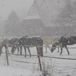 Zwei Std. später noch mehr Schnee !