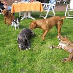 Gina, Yaskie, Pepper, Yuma, Kira