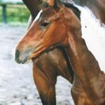 Natschi, 8 Wochen alt !