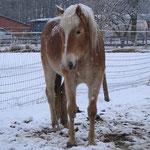 """""""Schneepferdchen"""" im Febr.`17"""