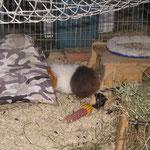 Orion + Amy + Dana (in der Hütte)