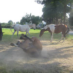Promo beim Anti-Bremsen-Sandbad ! Juli `12