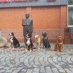 Die Junghundegruppe in der Innenstadt im Sept. `13 ( Foto von Verena)