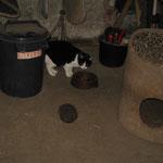 Wer kommt denn da, etwa ein Katzenfutter-Dieb ! Lissy + Igel